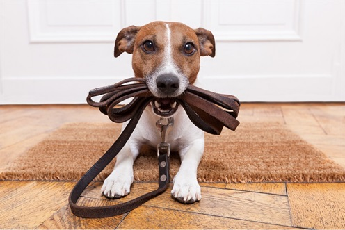 Dog with leash - Reminder about companion animals fines image.jpg